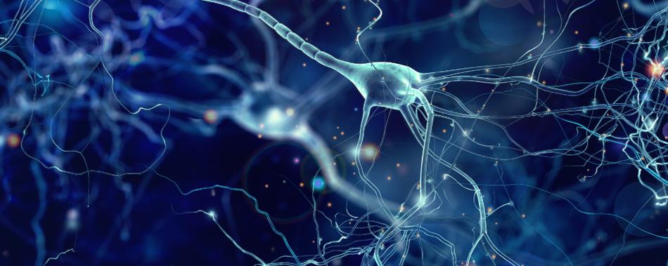 Генетический риск болезни Альцгеймера связан с высокой активностью мозга