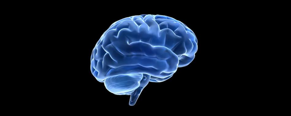 Люди могут выжить без ключевого гена аутофагии