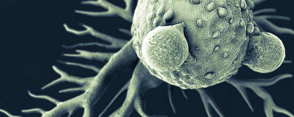 Прививка от гриппа у мышей вызывает иммунную атаку против рака
