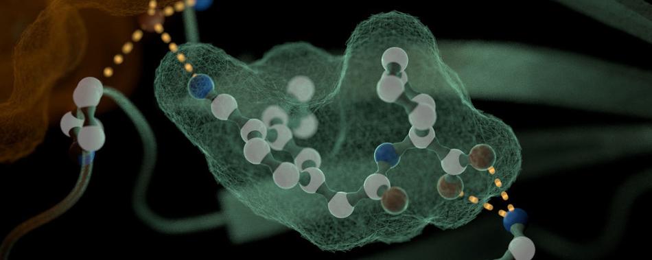 Лекарство, которое способно защитить растения от засухи: новое исследование