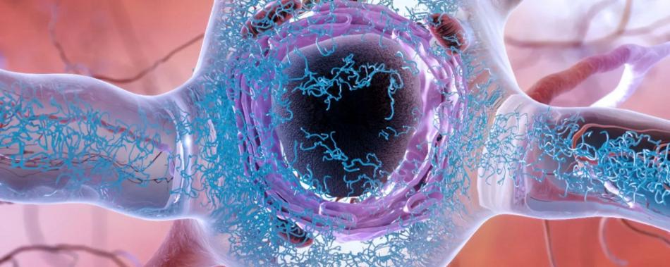 Гены расстройства употребления алкоголя и риска болезни Альцгеймера пересекаются