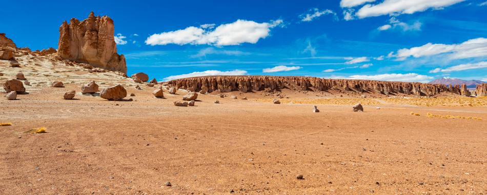 Жизнь летит по ветру в самой жаркой пустыне на Земле