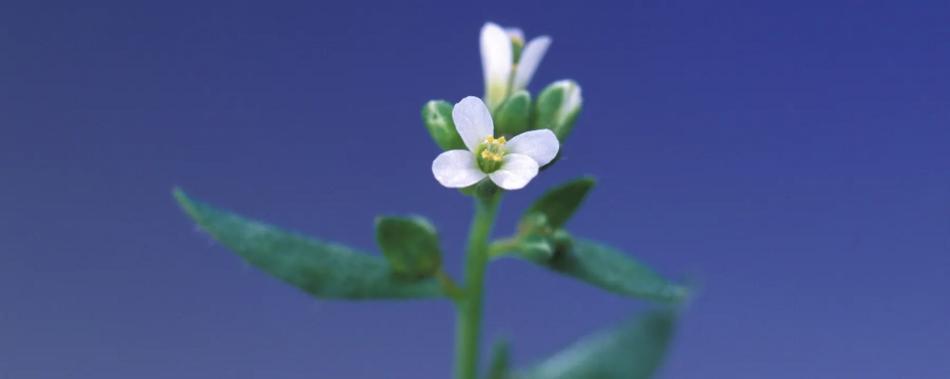 Растения используют РНК для общения с соседями