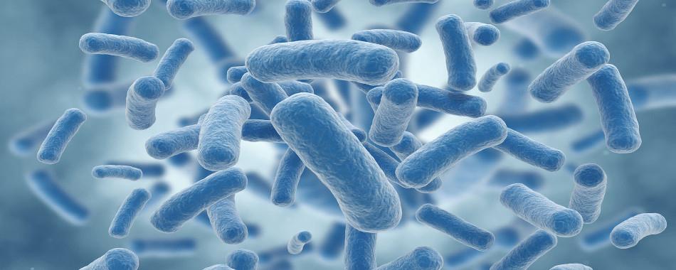Искусственные бактерии помогают лечить фенилкетонурию
