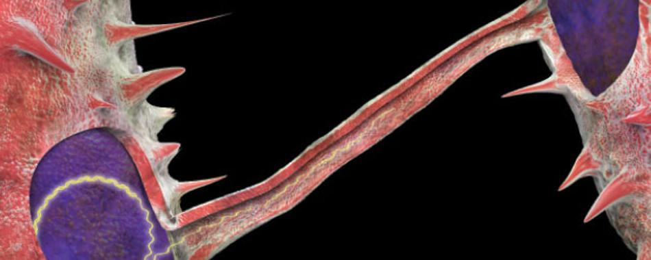 Геномы человека и бактерий имеют больше общего, чем мы думали (Часть 1)