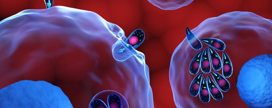 Нейросеть учат распознавать патогены человека