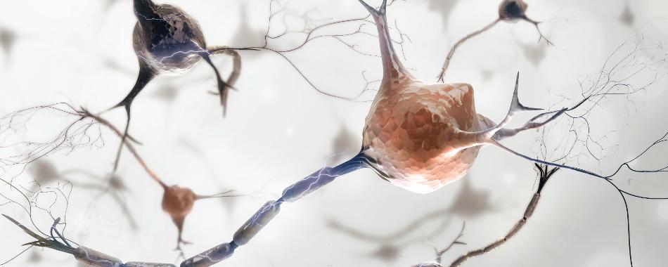 Пациенту с Паркинсоном пересадили нейроны, полученные из iPSC