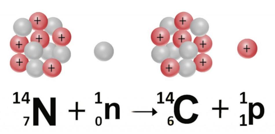 Атом азота превращается в изотоп углерода путем присоединения нейтрона