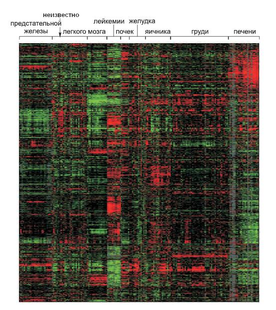 Различия в картинах экспрессии иРНК среди разных типов раковых клеток человека
