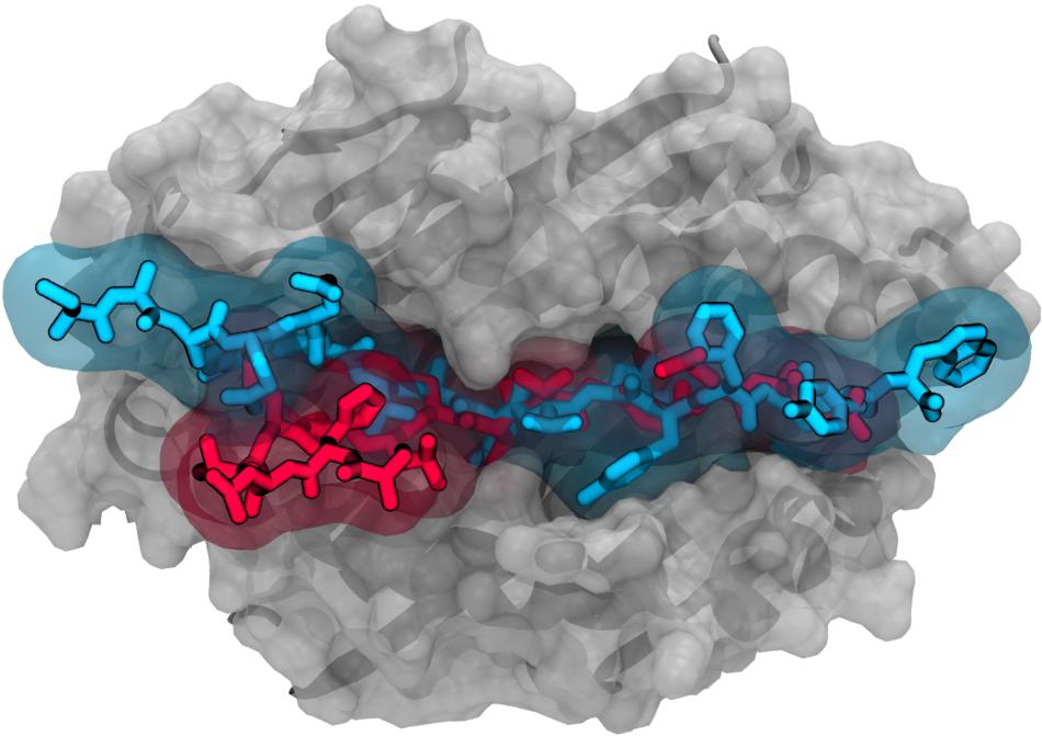 Гибридный Х - лимфоцит
